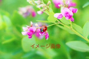 萩の風 イメージ画像